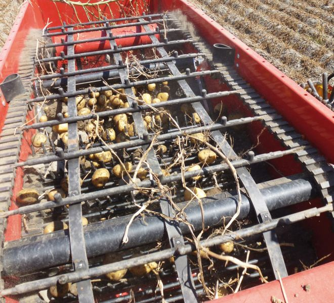 Scavaraccogli patate